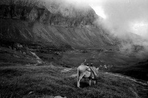 randonnée âne haute-savoie