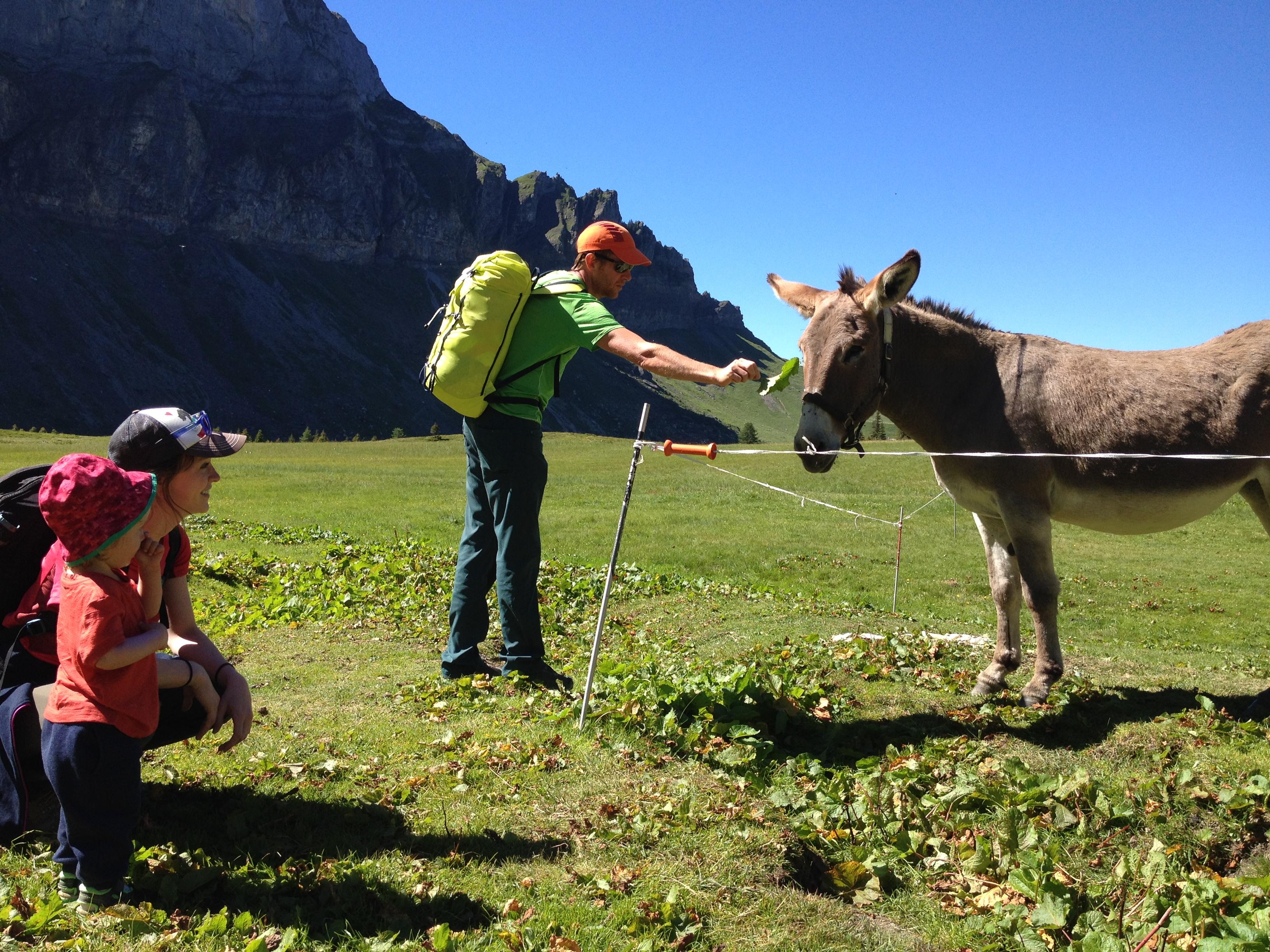 Rando avec âne de portage